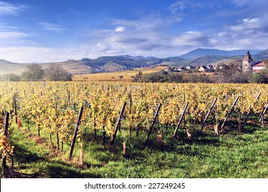 Landscape with autumn vineyards of wine route. France, Alsace