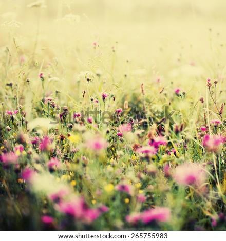Landscape Background Beautiful Field Flowers Summertime Stock Photo