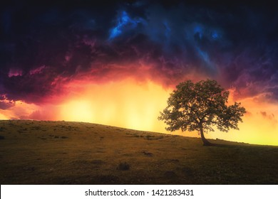 landscape background of lonely tree on hill with dramatic sky