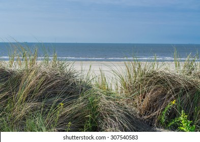 Landscape with beach overlooking the sea, sand dunes and grass, Ouddorp, North Sea, Holland.