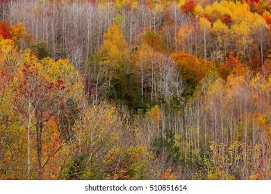 Landscape beautiful autumn nature on the hillside of Kure Mountains in Kastamonu, Turkey