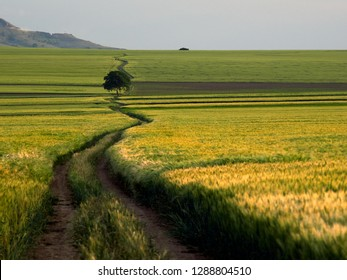 landscape with beautiful field in spring, Dobrogea, Romania