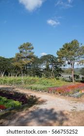 Landscape of Beautiful  flower field.