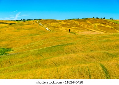 Landscape of the beautiful hilly tuscany field in summer with cultivated area in Valdorcia Italy