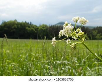 Landscape of beautiful meadow in czech republic in buchlov forests..
