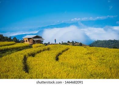Landscape of Beautiful rice field, rice terrace