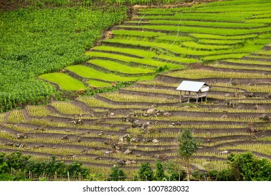 Landscape of beautiful rice terrace with green and yellow color on mountain in Thailand