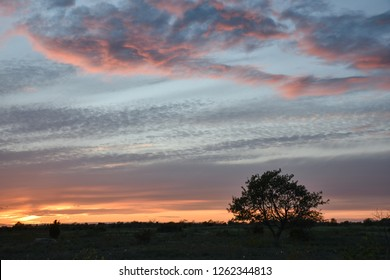 Landscape with beautiful skies and a lone tree silhouette by sunset
