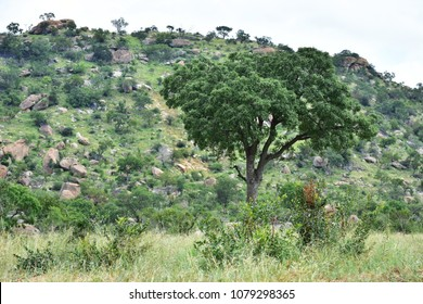 Landscape in Berg en Dal rest camp in Kruger National park in South Africa