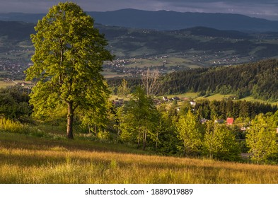 Landscape of Beskid Wyspowy view of a fragment of the Łososiński Range. - Shutterstock ID 1889019889