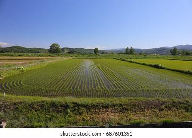Landscape of Biei Hokkaido Japan