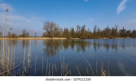 Landscape of Biesbosch National Park, Netherlands