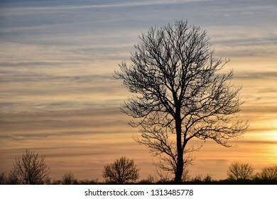 Landscape with a big bare tree silhouette by the setting sun