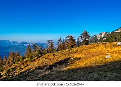 Landscape with big old pine trees in the mountains a sunny summer dno