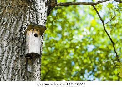 Landscape with bird house on the tree trunk