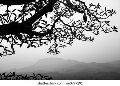 Landscape Black and White,Silhouette Tree branches on Mountain background