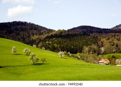 Landscape in the Black-forest, Germany ,Glottertal
