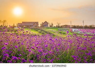 Landscape of blooming lavender flower field with beautiful house on mountain under the red colors of the summer sunset.