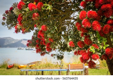 Landscape with blooming pohutukawa tree and beautiful ocean bay with colourful kayaks at Hakanaka Bay, next to Picton, New Zealand