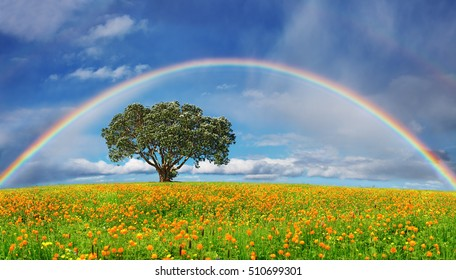 Landscape with blossoming field and rainbow
