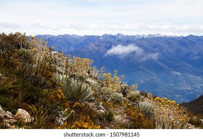 Landscape of Blue Hills with vegetation of Paramo