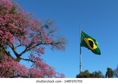 Landscape with blue sky background, with pink, purple, flowery ipe tree branches and a fabric with the national Brazil flag.