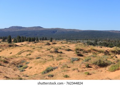 Landscape. The border between the desert and the trees.USA.