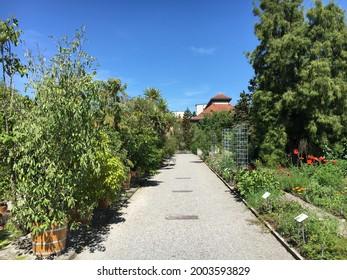 Landscape of the Botanical Garden St. Gallen or Landschaft des Botanisches Garten St. Gallen, Schweiz (The Botanical Garden in Saint Gall, Switzerland) - Shutterstock ID 2003593829