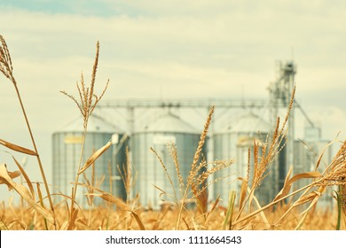 Landscape. Bright nature. Elevator. Large aluminum containers for storing cereals against the blue sky and voluminous clouds. A field of golden ripe wheat. Harvest season