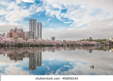 Landscape building reflection with blue sky and sakura bloom in Ueno park, Tokyo, Japan