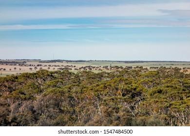 Landscape of a bush and eucalyptus trees in Western Australia