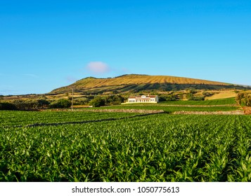 Landscape with Caldeira in the background, Graciosa Island, Azores, Portugal