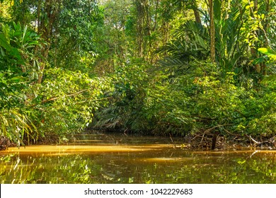 Landscape of the canals inside the Tortuguero national park rainforest during a boat trip on a sunny day, Costa Rica, Central America.