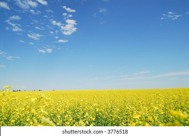 Landscape, canola field with focus on old grain elevator far away. Blue sky and white fluffy clouds.