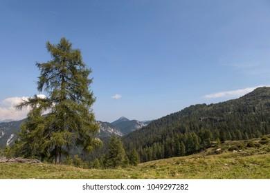 landscape in carinthia