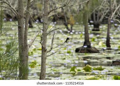 Landscape in Cattai Wetlands in Australia