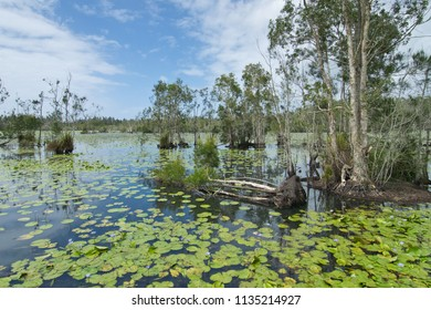 Landscape in Cattai Wetlands in Australia