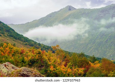 landscape of the Caucasian highlands with a cloud on a mountainside and multicolored trees in the foreground