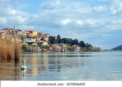 Landscape of the city of Kastoria from Lake Orestiada, Greece. With a pelican.