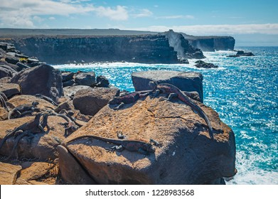 Landscape of the cliffs at Punta Suarez by the Pacific Ocean on Espanola Island with marine sea iguanas in the foreground, Galapagos Islands national park, Ecuador.