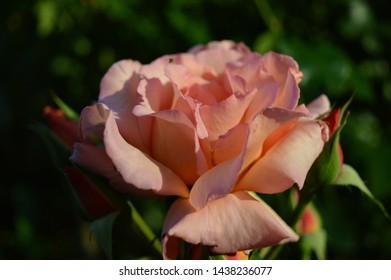 Landscape close up photography of orange red rose blooming