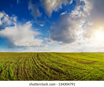 Landscape, cloudy sky above the field with unripe wheal