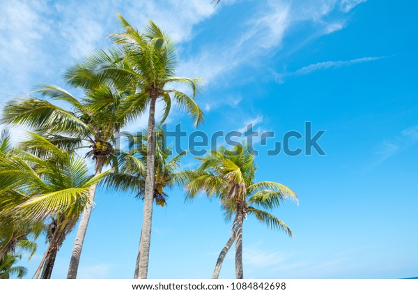 Landscape of coconut palm tree on tropical beach in summer.
