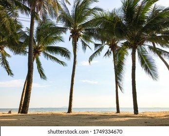 Landscape coconut trees on the bangsean beach, chonburi, thailand that was empty person on covid-19