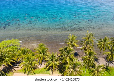 Landscape with coconut trees and turquoise lagoon, view from above.Seascape with palm trees and a pebbly beach,Philippines,Camiguin,aerial view.