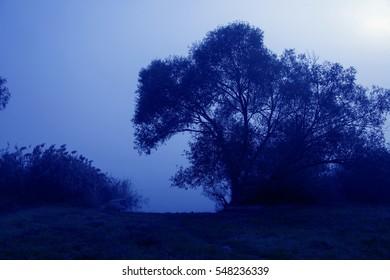 Landscape in cold tones.
