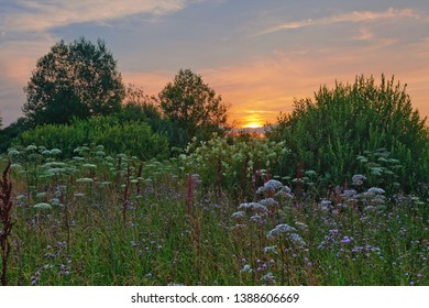 Landscape with coloful sunset in summer field with flowers