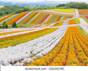 Landscape of colorful flower bed in summer of Hokkaido for natural background