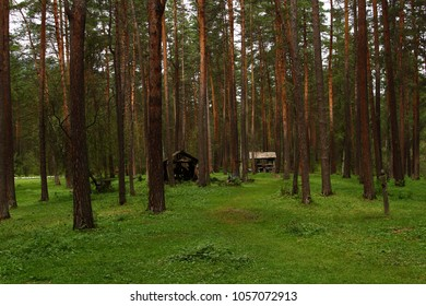 Landscape of coniferous forest. Old sheds in pine forest.