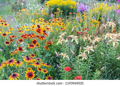 Landscape in countryside with different bright garden flowers in bright warm summer day. Rudbeckia and lily plants.